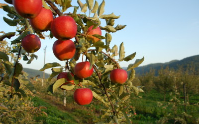 One Apple-Picking Trip of the Season Keeps Doctors Away for a Reason